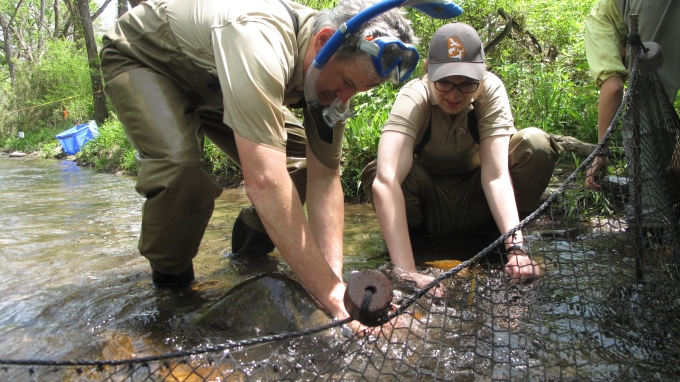 Photo: Biologists set a fyke set to catch sicklefin redhorses. Credit: G. Peeples